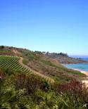 Cerda, Sicilia degustazione vini e assaggi tipici per 2 persone - Enocaffè Italia